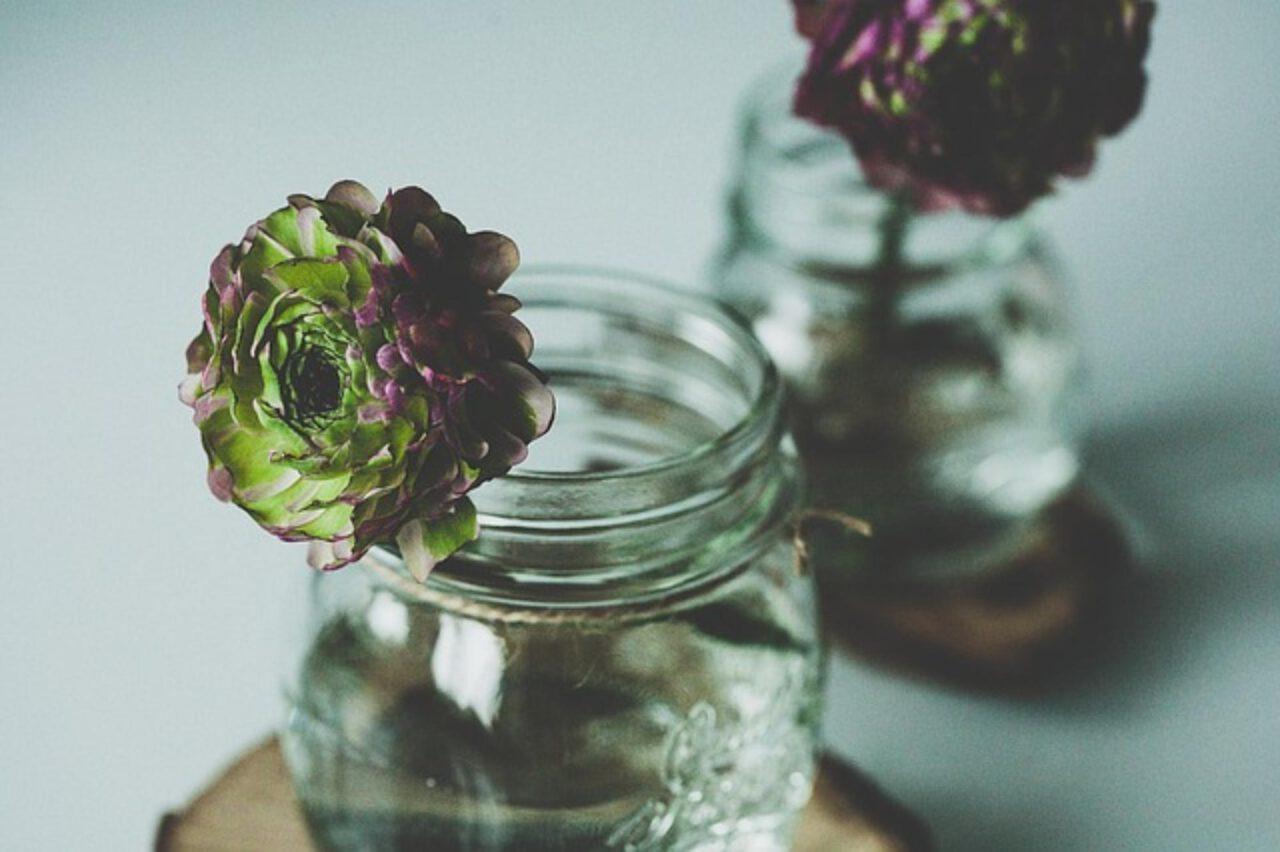 Ogród w słoiku – co warto wiedzieć?